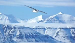il silenzio della natura alle Svalbard
