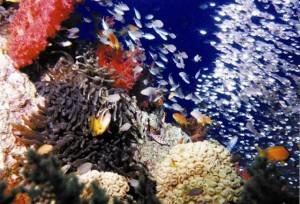 fondali di Aqaba