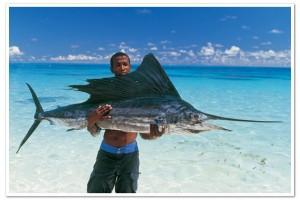 pesca al marlin nero, seychelles.travel