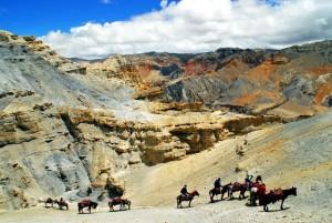 Mustang a cavallo