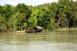 Bangladesh, foresta di mangrovie nel Delta del Gange