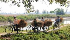Bangladesh trasporto di fieno