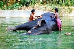 Kerala, elefante