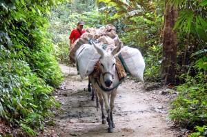 trasporti in Colombia