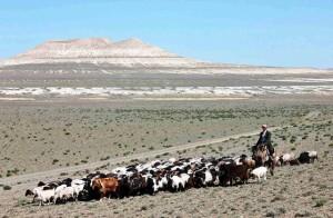 gregge in Kazakistan