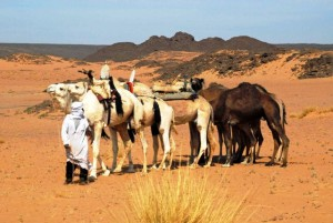 spedizione in Algeria
