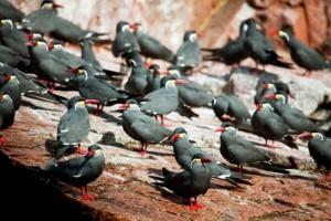 Perù biodiversità