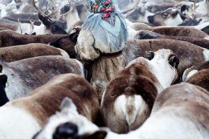 donne nomadi Nenet
